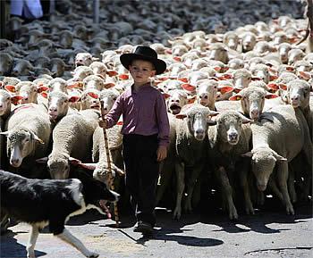 moutons-enfant