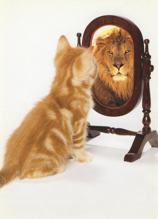votre-ego-va-vous-permettre-d-avancer